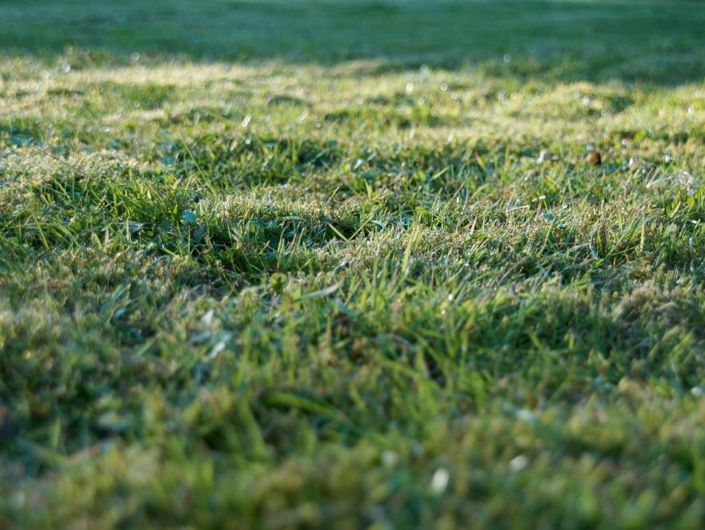 Foto_Grundstück